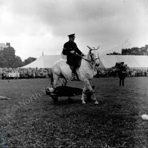 Mounted Police Display
